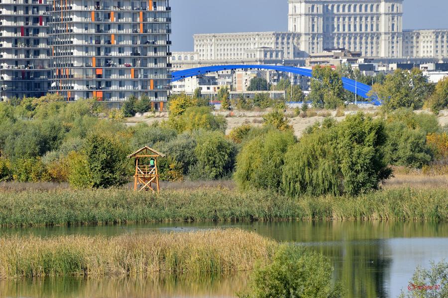 fotografie Foisorul ornitologic Delta Bucurestiului parcul Vacaresti