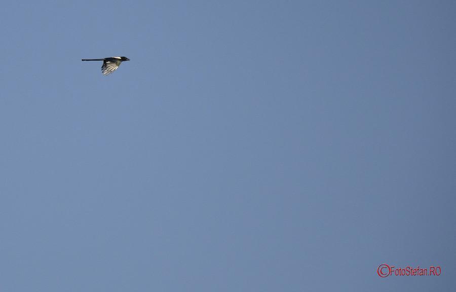 poze foto pasari salbatice Parcul Natural Vacaresti  Delta Bucurestiului