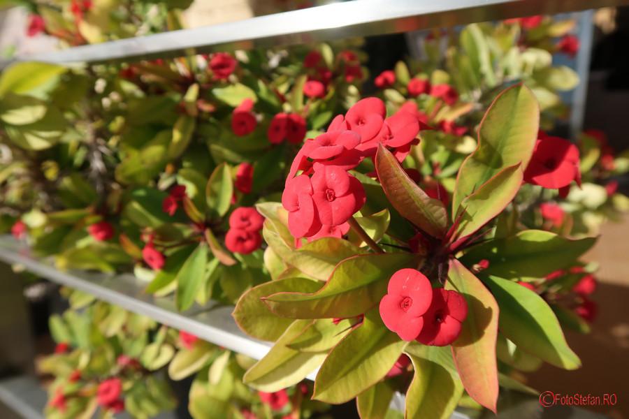 Canon G7 X Mark II test poza flori rosii malta