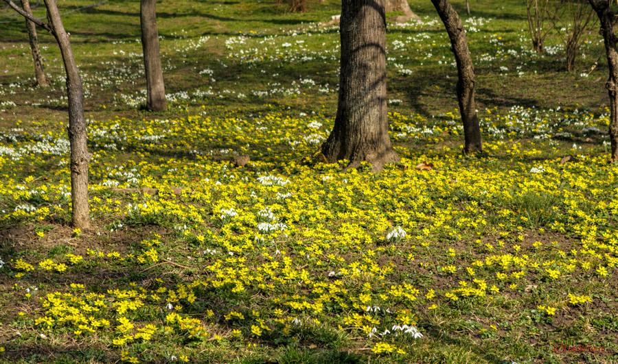 poze flori parc gismigiu bucuresti canon g7 x mark ii