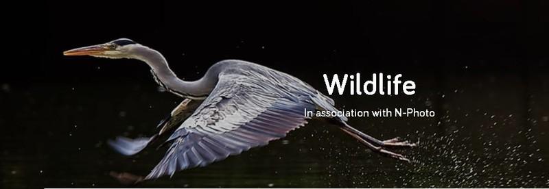 pasare zbor fotografie wildlife