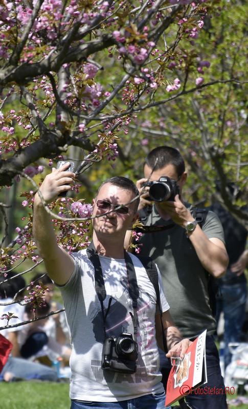 poza fotografi flori ciresi gradina japoneza herastrau bucuresti Fotografierea cu telefonul mobil