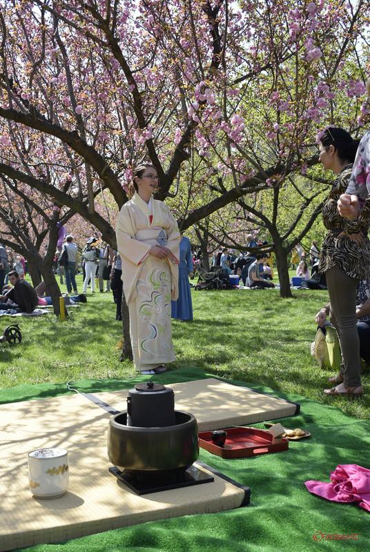 ceremonia ceaiului gradina japoneza parcul herastrau bucuresti