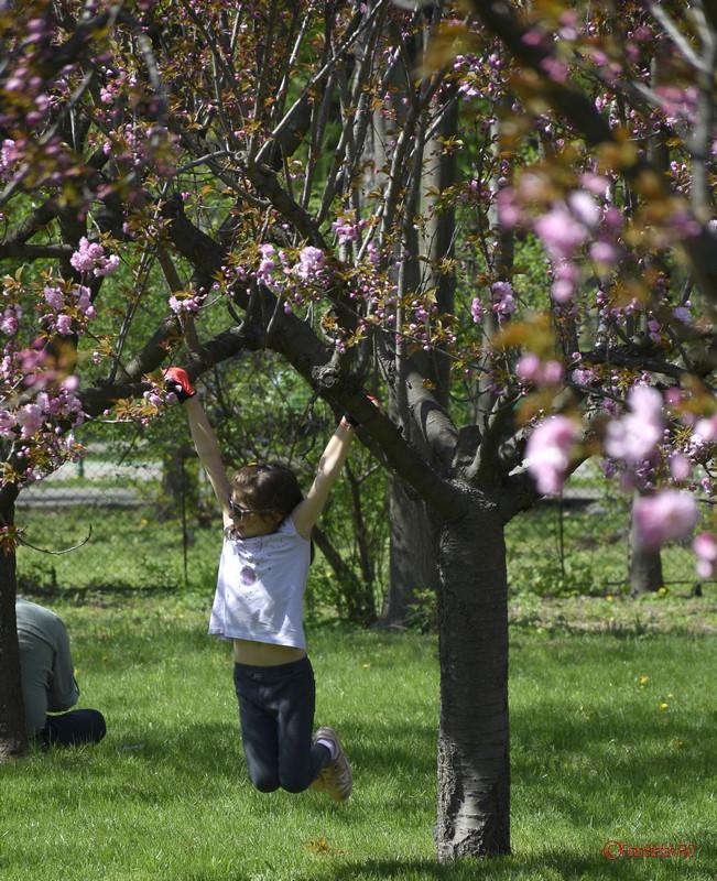 poza fetita leagan copac cires gradina japoneza bucuresti