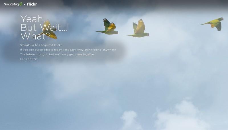 poza pasari cer albastru anunt SmugMug Flickr