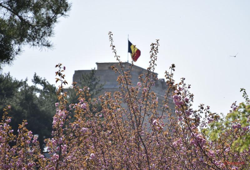 poza ciresi infloriti gradina japoneza bucuresti arcul triumf steagul romaniei