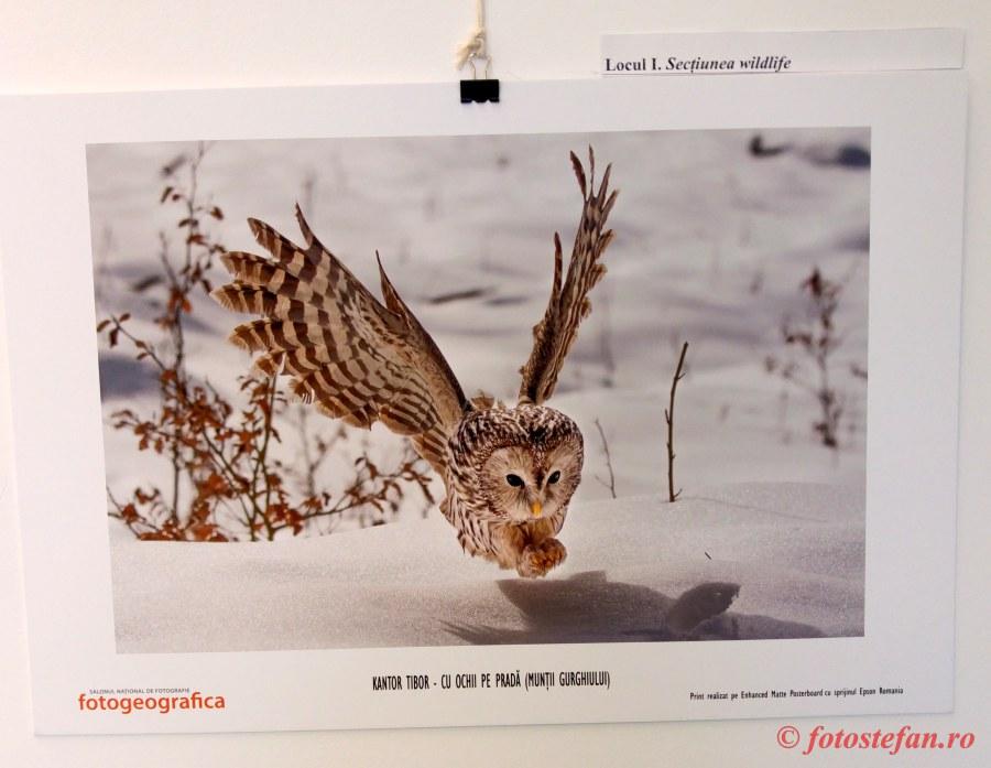 poza huhurez mare iarna zapada Fotogeografica 2018 Kantor Tibor