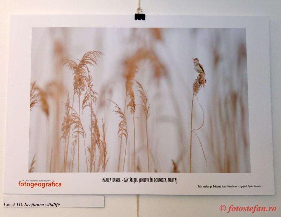poza pasare trestie dobrogea vernisaj Salonul National de Fotografie Fotogeografica