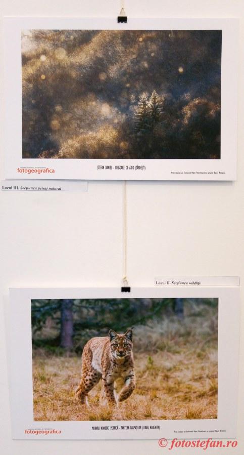 poza natura wildlife romania expozitie foto TNB