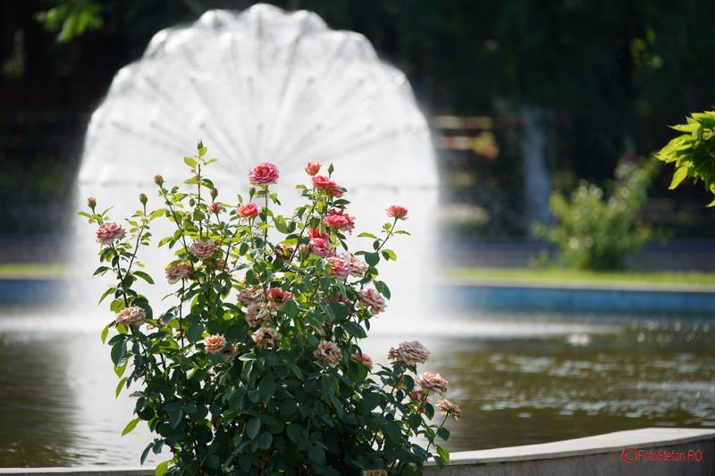 poze trandafiri fantana oraselul copiilor bucuresti review Sony A7 III