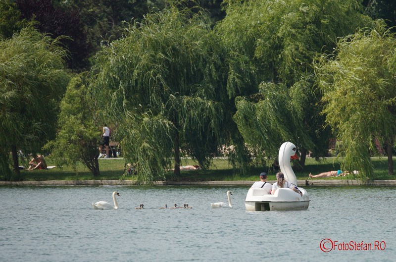 lebede lac titan parc a.i. cuza bucuresti test Sony A7 III