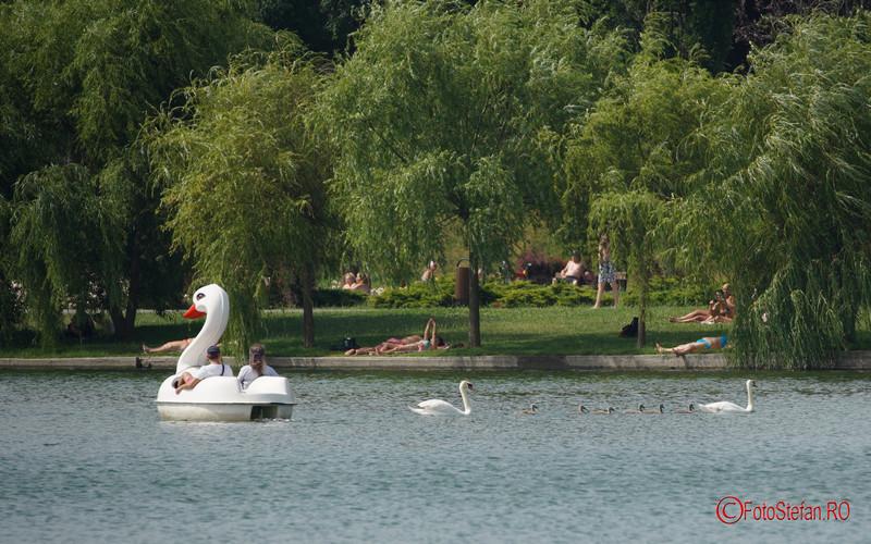 foto lebede lac titan parc ior bucuresti sector 3 romania