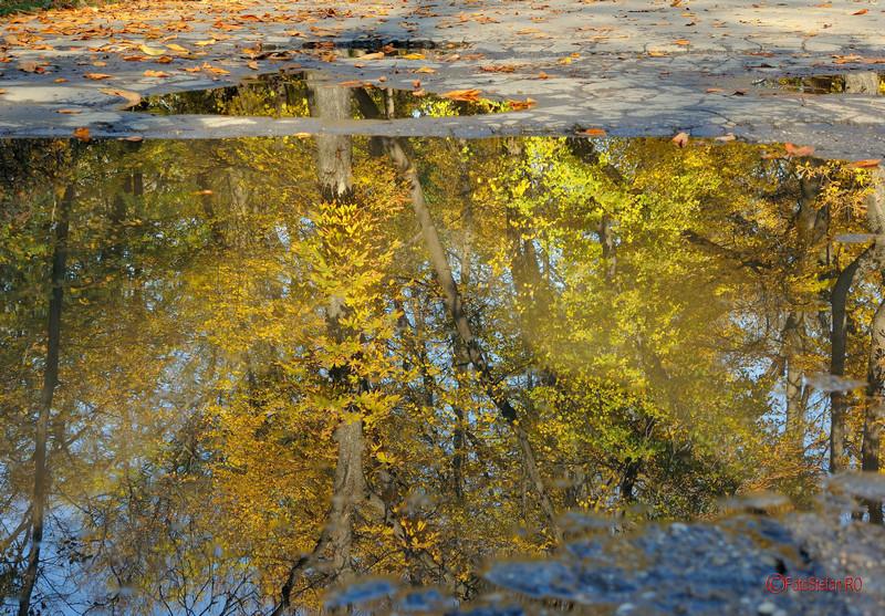 poza reflexie toamna parc herastrau bucuresti romania