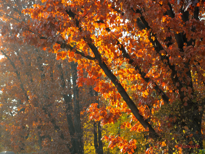 toamna poze bucuresti romania copaci frunze
