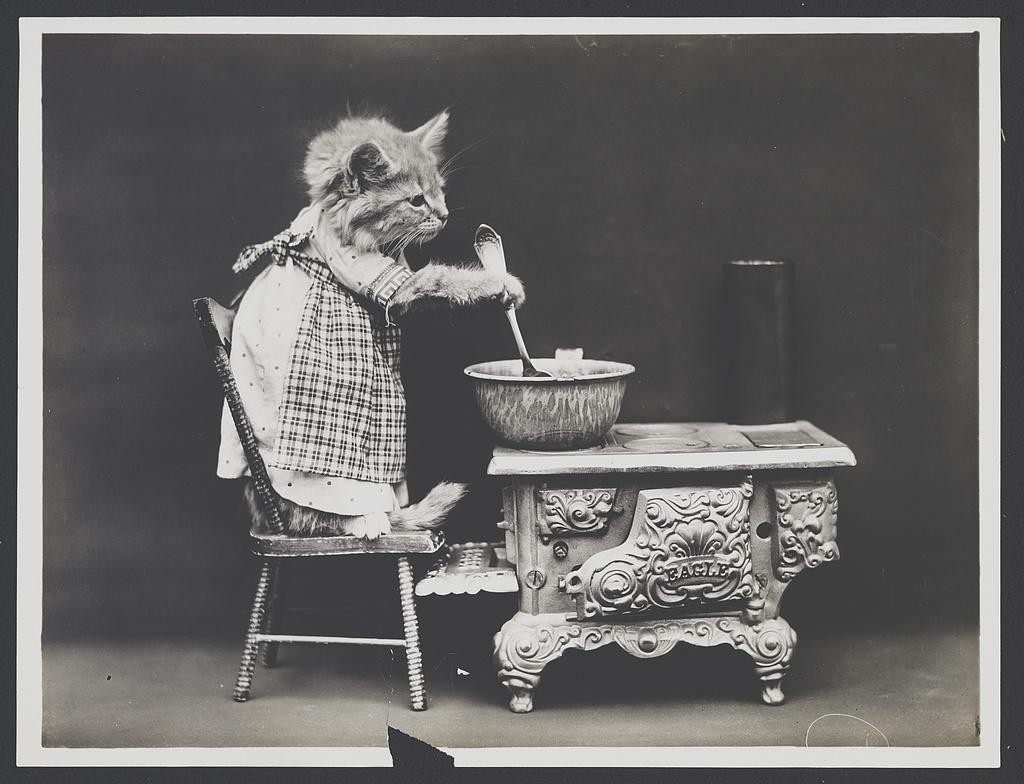 Harry Whittier Frees fotograf animale de companie poze amuzante pisici