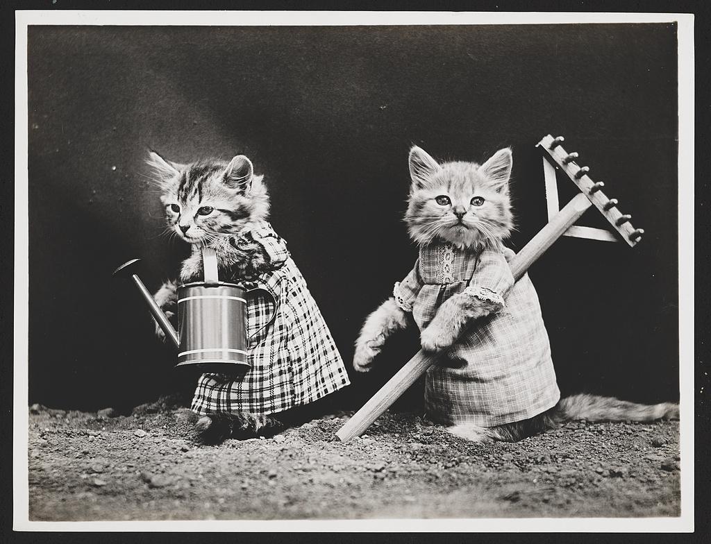Harry Whittier Frees fotograf animale companie pisici poze amuzante haioase