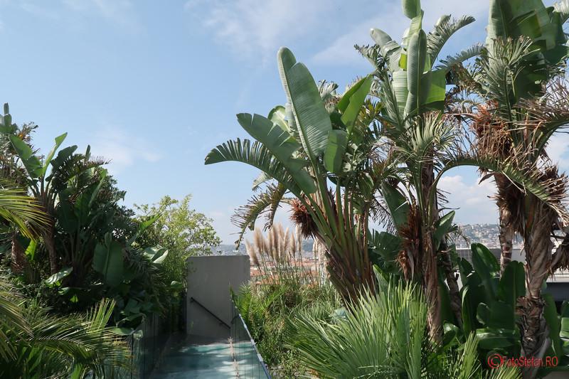 poze fotografii palmieri nisa franta terasa mamc