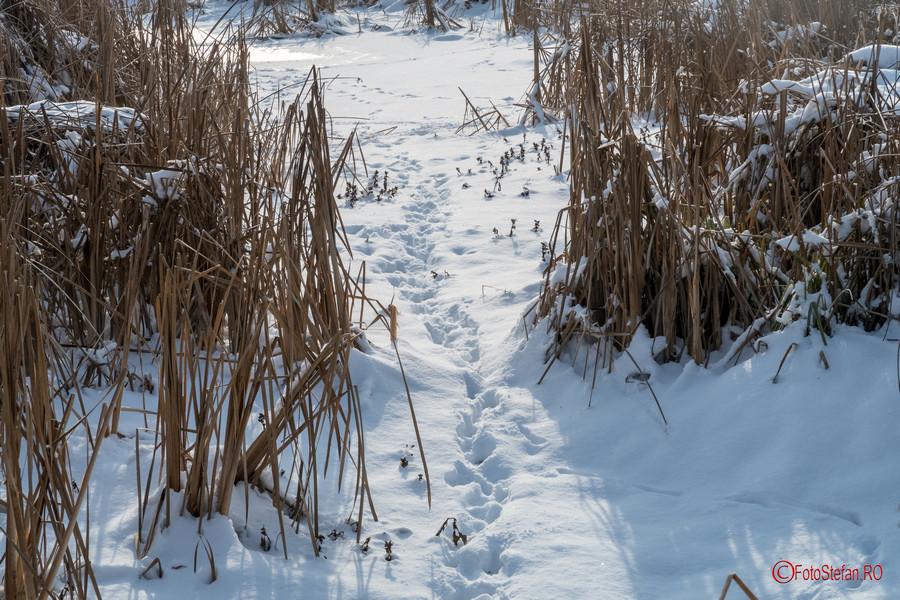 fotografii iarna parcul Vacaresti Bucuresti zapada