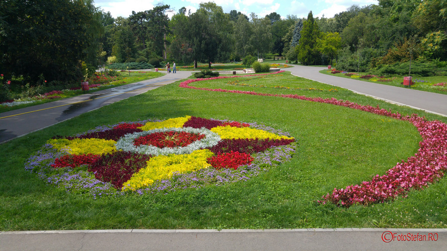 poza flori parcul botanic timisoara romania