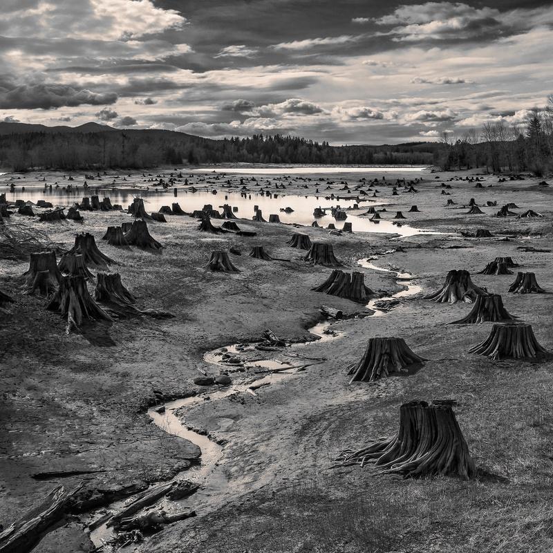 fotograf sua hal gage trunchiuri copaci poza