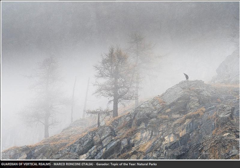 Marco Ronconi fotograf italian poza ceata munte capra salbatica