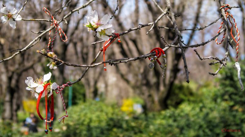 fotografie martisoare copac traditii obiceiuri romanesti primavara