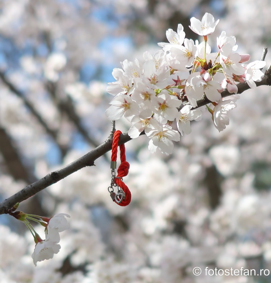 poze martisor copac cires bucuresti traditii romanesti