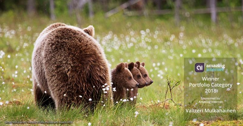 poza ursoaica ursuleti fotografie amuzanta