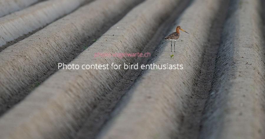 Bird Photography Competition fotografii pasari premii