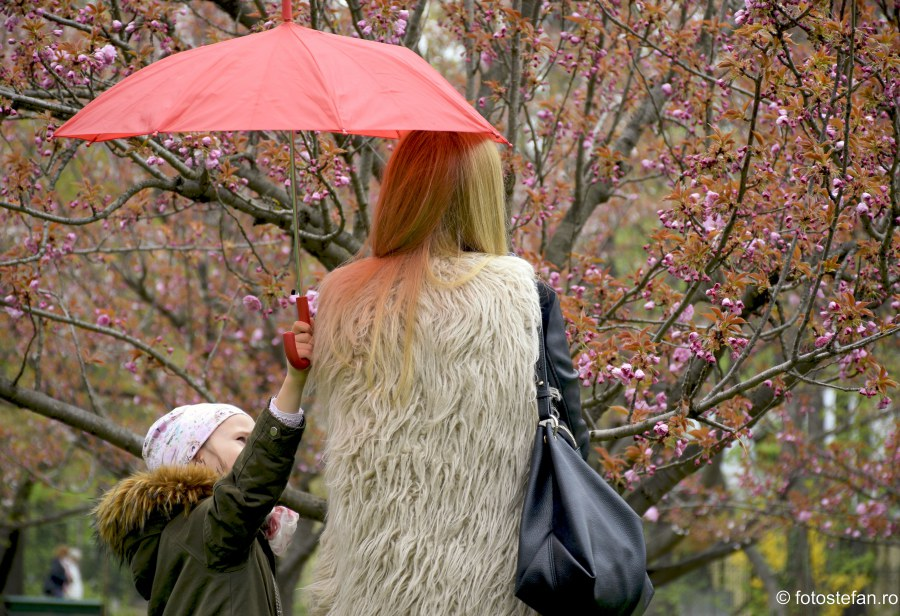 poze Hanami Bucuresti gradina japoneza herastrau umbrela