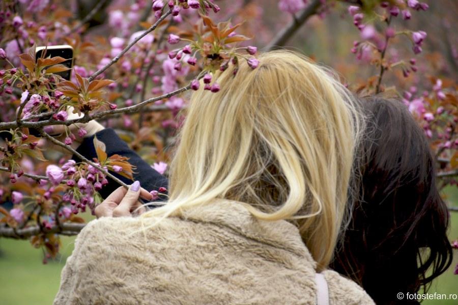 selife flori de cires Hanami Bucuresti poze gradina japoneza