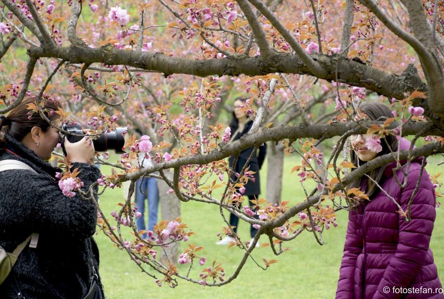 fotografii fete flori de cires gradina japoneza herastrau