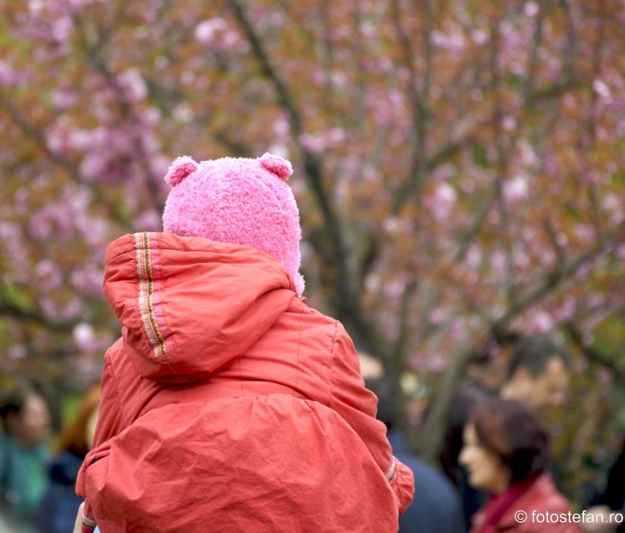 poze sarbatoare florilor de cires parcul herastrau
