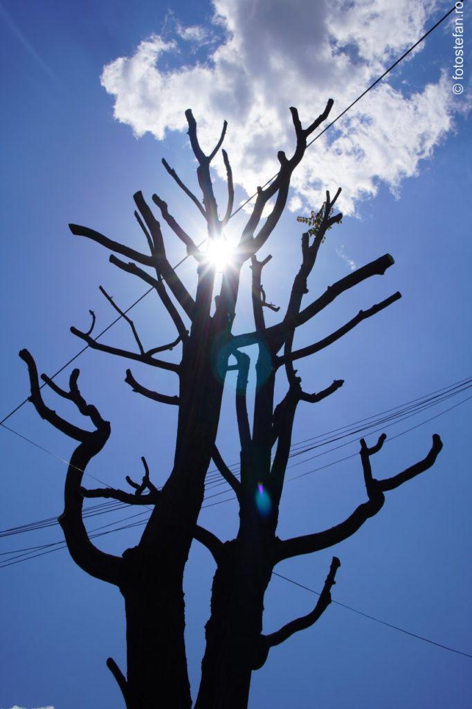 fotografie ramuri copac soare lens flare sony 16-70mm f4