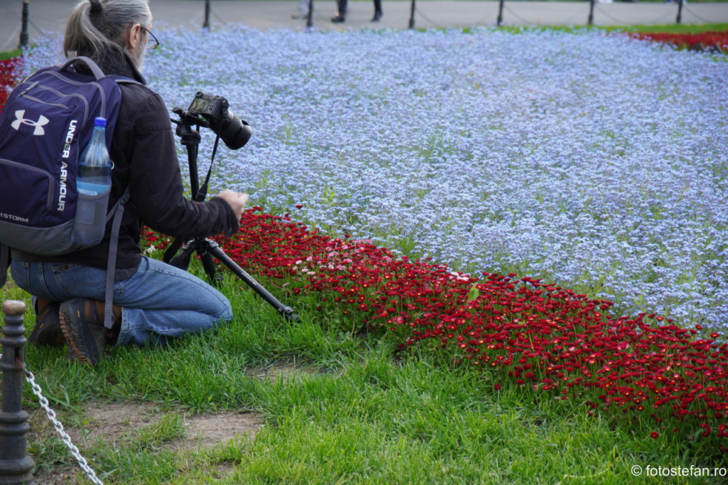 poza fotograf flori cismigiu bucuresti