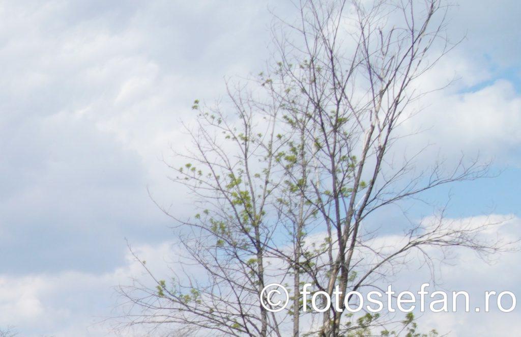 detaliu crengi copaci parc bordei bucuresti