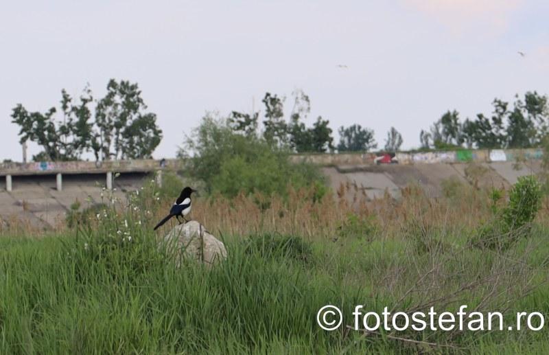 fotografie pasare delta vacaresti bucuresti Canon RF 24-105mm F4L IS USM