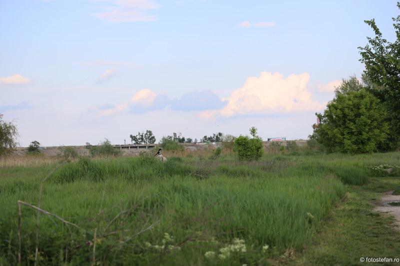 poza pasare parcul vacaresti delta bucuresti