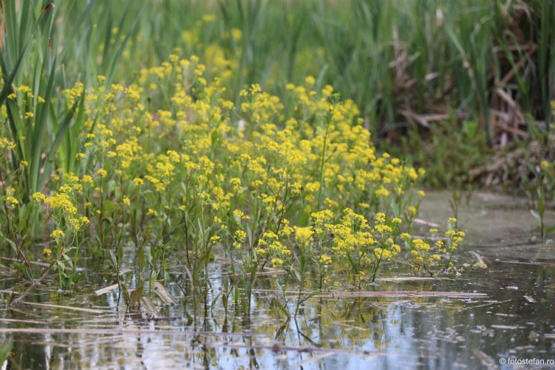 poza fauna flori lac parc vacaresti bucuresti