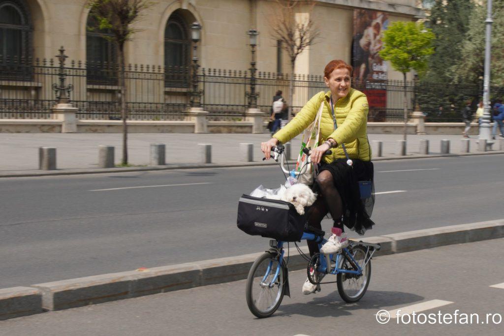 poza biciclista catel bucuresti romania fotografii