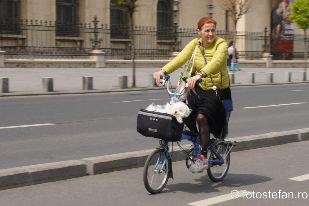 fotografie pista biciclisti bucuresti romania