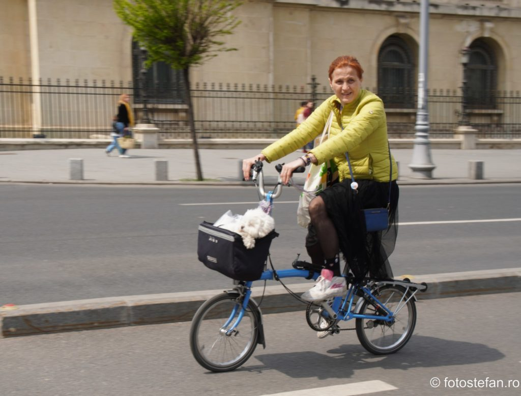 imagine catel plimbat cu bicicleta