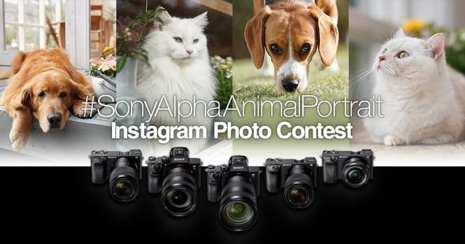concurs foto portrete de animale de companie #SonyAlphaAnimalPortrait