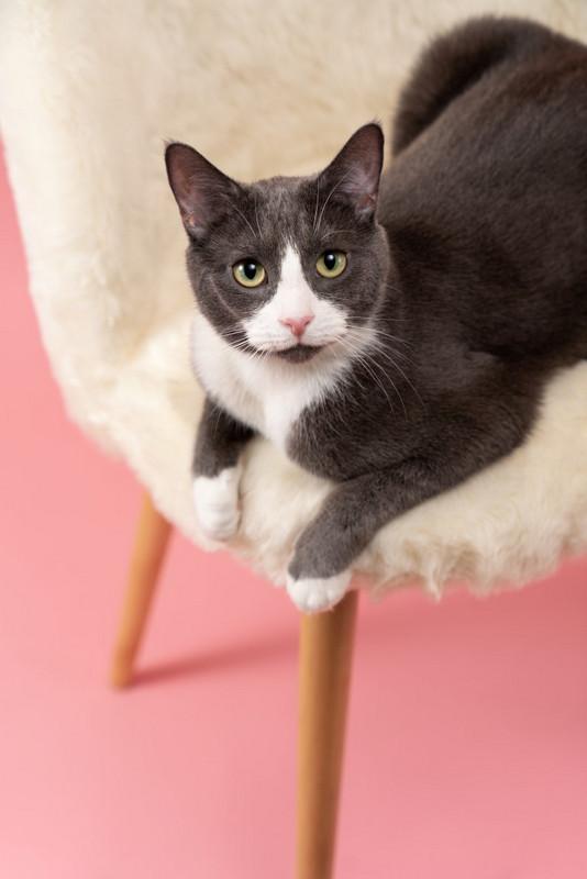 fotografie instagram pisica safta fotografiere animal companie