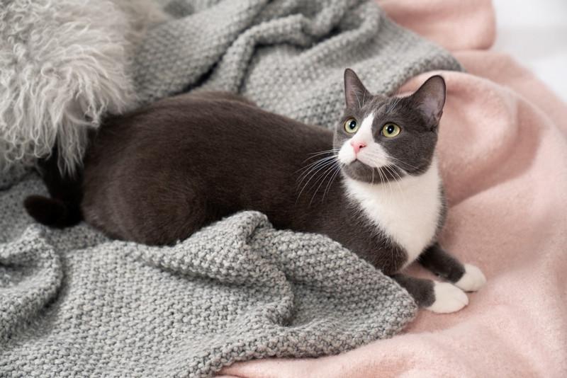 animale companie cont instagram pisica