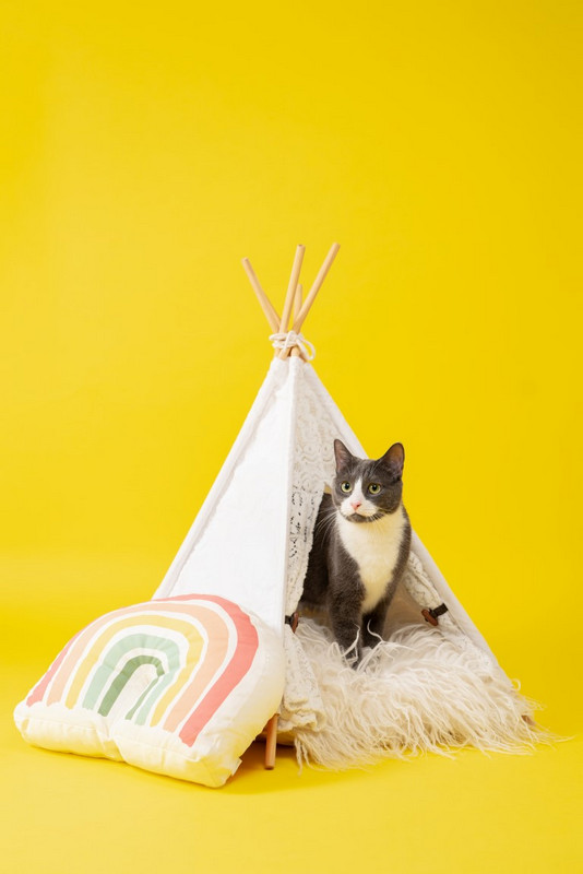 poza instagram pisica patruped animal de companie