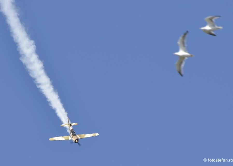 poze avion pasare cer albastru bucuresti romania
