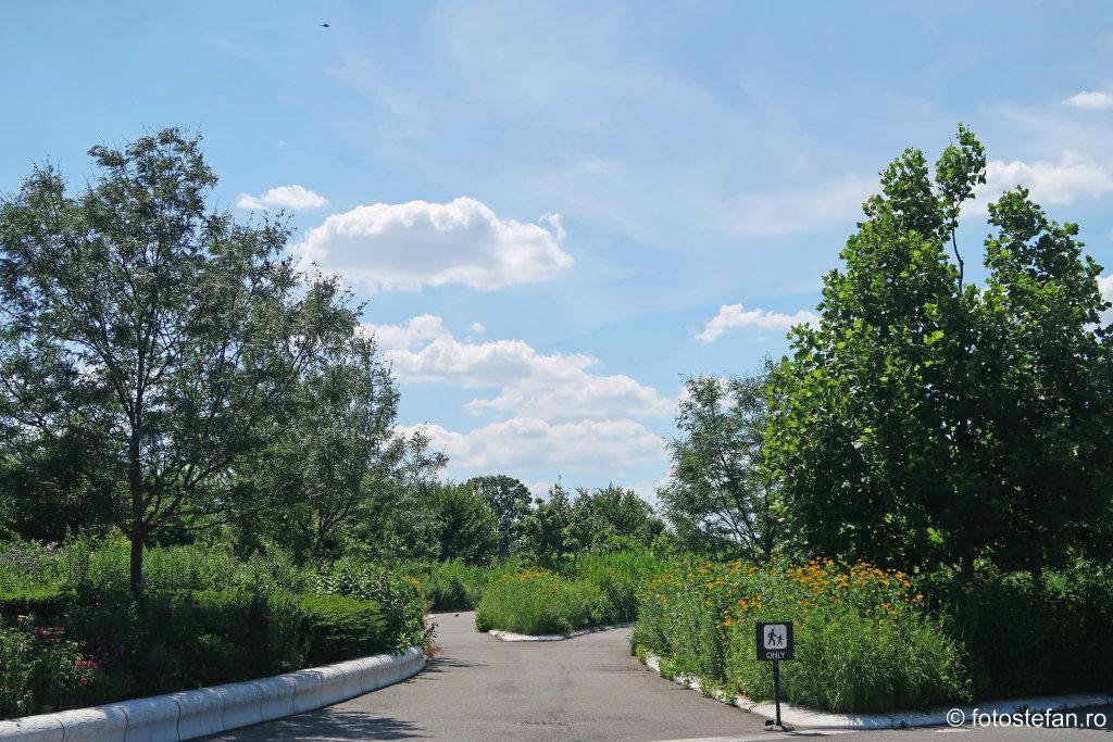 poze vegetatie insula Guvernatorilor new york turism america