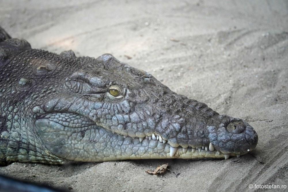 fotografii Gradina Zoologica Bucuresti crocodil poza