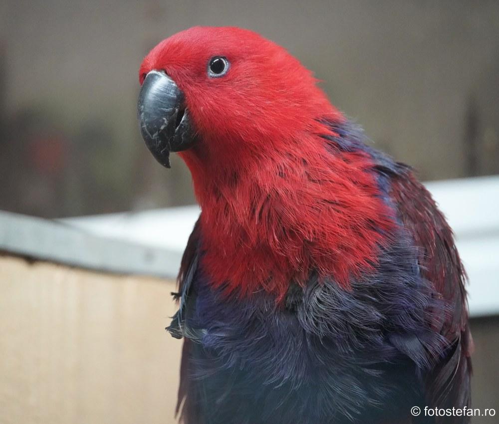 fotografii papagali Gradina Zoologica Bucuresti pareri